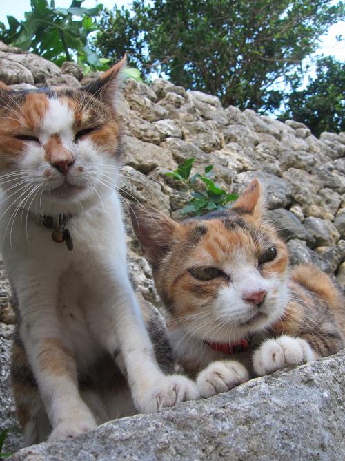 Midori & Momo._c0153966_175653.jpg
