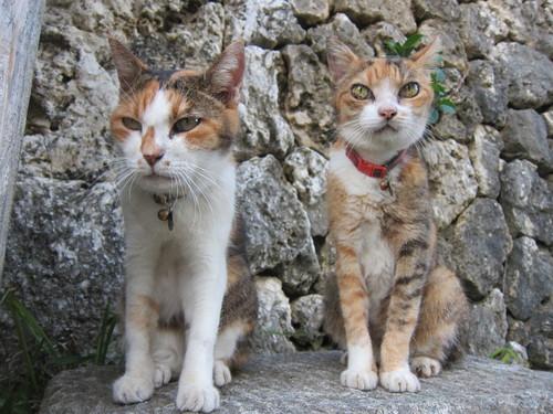 Midori & Momo._c0153966_17581150.jpg