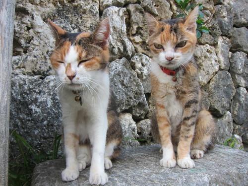 Midori & Momo._c0153966_18161861.jpg