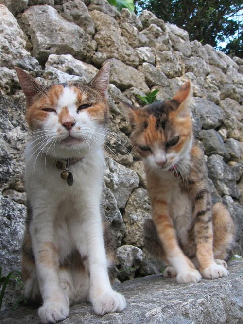 Midori & Momo._c0153966_1821877.jpg