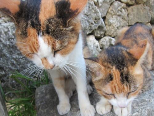 Midori & Momo._c0153966_1823774.jpg