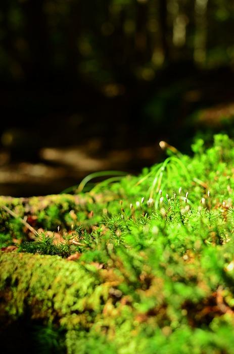白駒の池と苔の森_b0341869_21431444.jpg