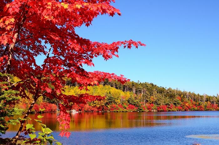 白駒の池と苔の森_b0341869_21432545.jpg