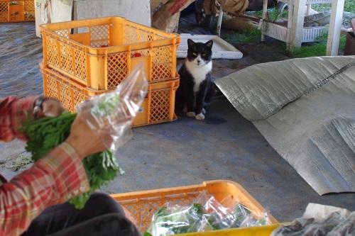 今週の野菜セット(9/30~10/4着)_c0110869_15113966.jpg