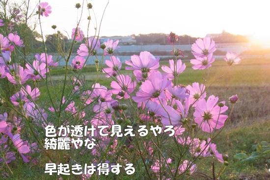 b0149072_1744207.jpg