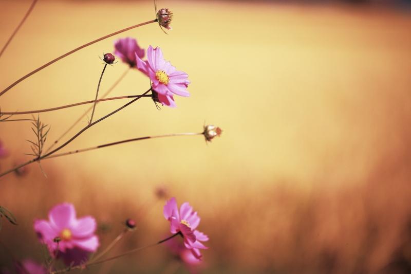 秋の日_f0075075_19393839.jpg
