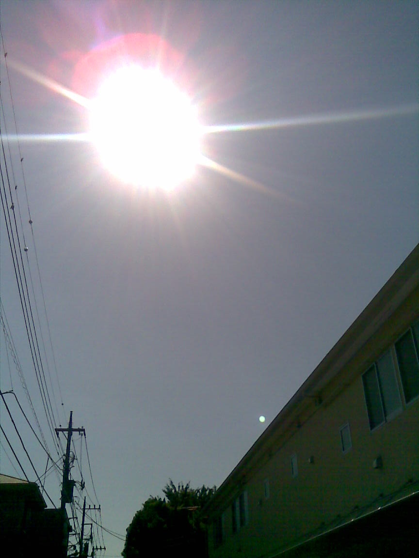 本日は快晴で暑かった_d0061678_18503284.jpg