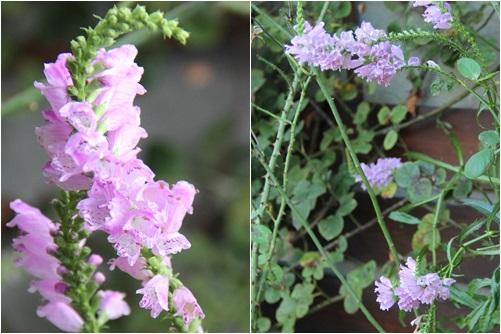 ◆小さな花たち_e0154682_21523528.jpg