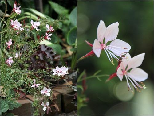 ◆小さな花たち_e0154682_21525140.jpg