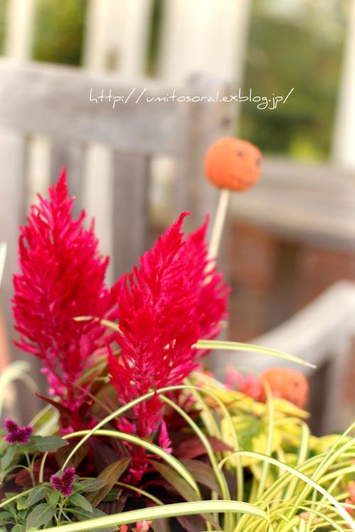 公園に咲く花たち_b0324291_23003476.jpg