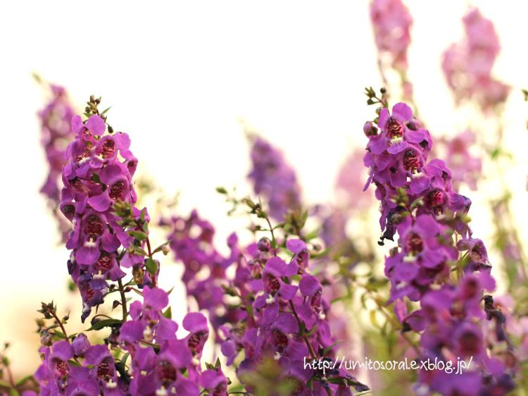 公園に咲く花たち_b0324291_23003581.jpg