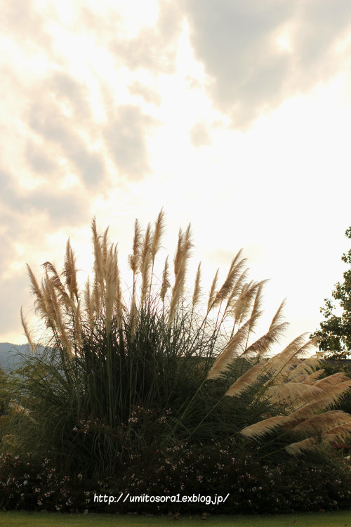 伊勢志摩への旅 *松阪農業公園ベルファーム_b0324291_23470871.jpg