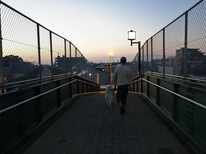 お散歩るんるん♪ そしてインディアンジュエリー(^o^)_c0049299_23151175.jpg