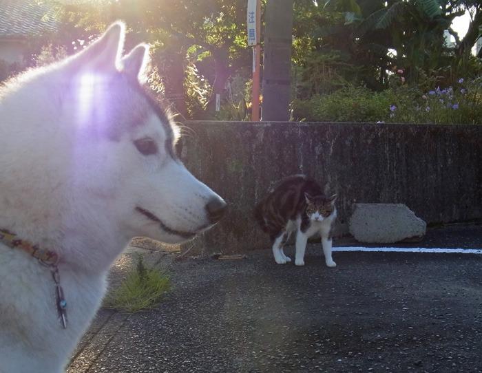 お散歩るんるん♪ そしてインディアンジュエリー(^o^)_c0049299_237617.jpg