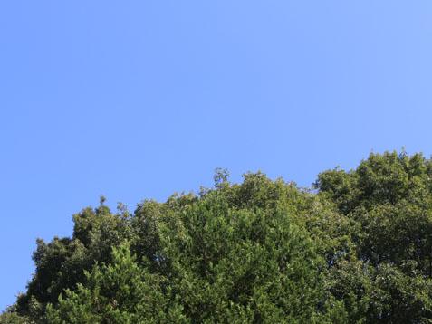 今日は真夏日だとか(≧▽≦)_c0140599_11111419.jpg