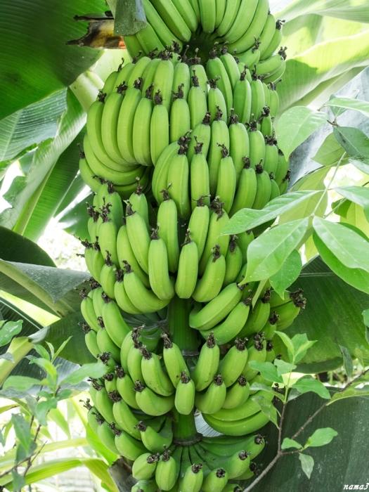 ドドドーンっとバナナ_f0224100_06211713.jpg