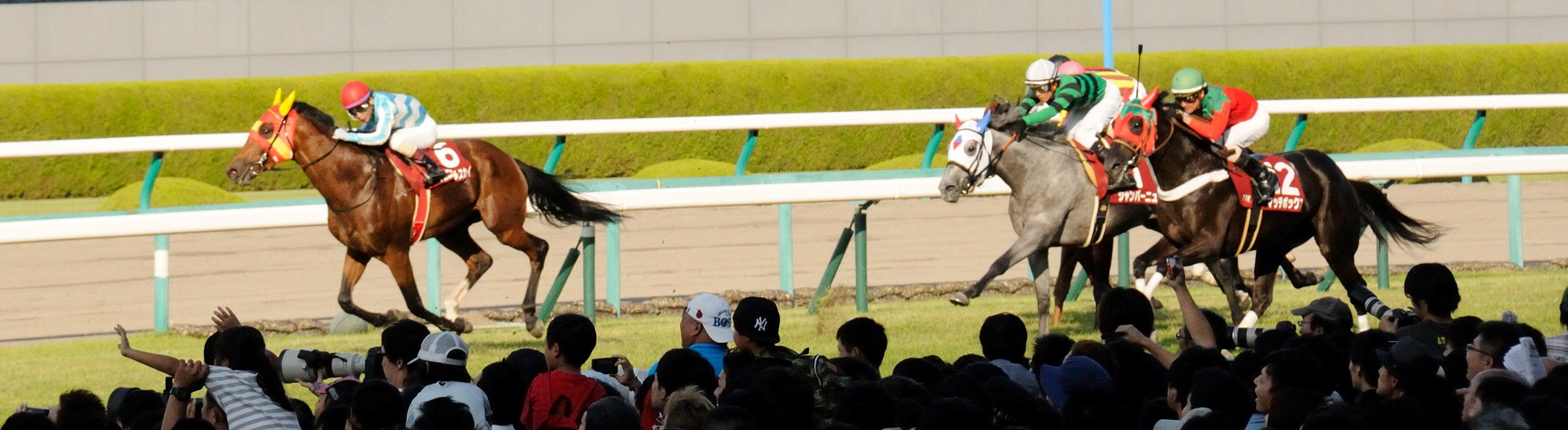 阪神競馬場は近くて好いのだが駐車場が少ない<笑い>_f0053218_222818.jpg