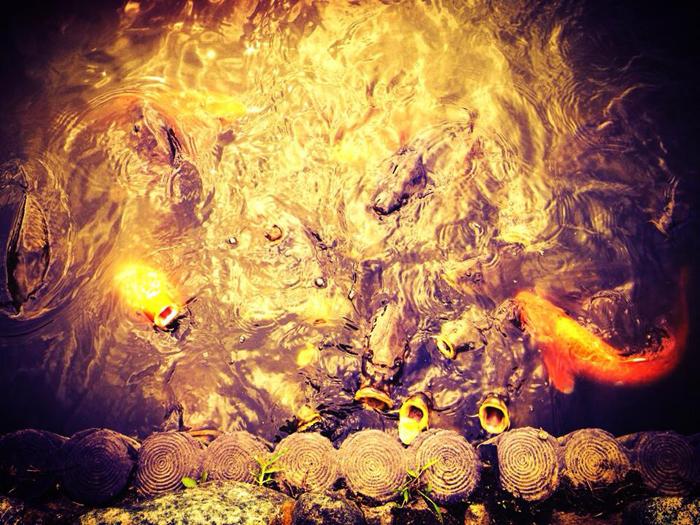 善福寺公園 / iPhone 4s_c0334533_15313843.jpg
