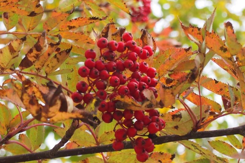 小さい秋見つけた_b0106766_1132380.jpg