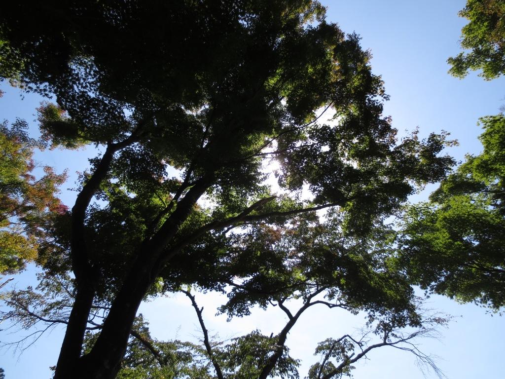 秋の高尾山_c0310571_09200554.jpg