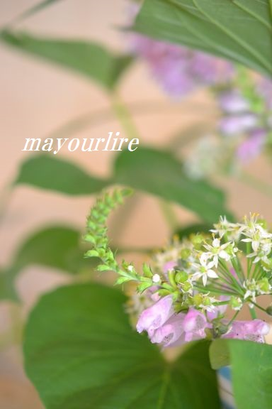 9月  テーブルコーディネート マユールライラ 海吉教室_d0169179_16201881.jpg
