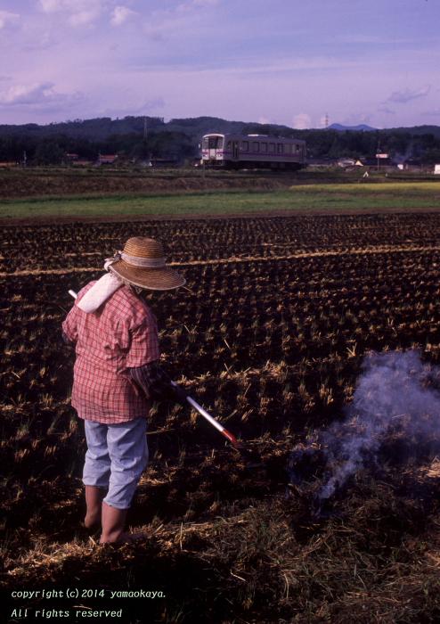 収穫後の田で_d0309612_2352868.jpg
