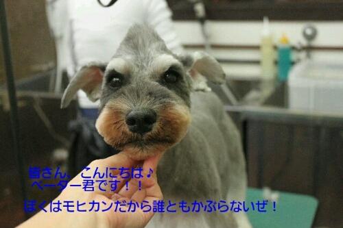 b0130018_22175099.jpg