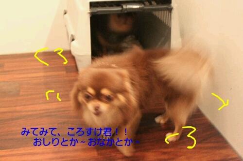 b0130018_2225540.jpg