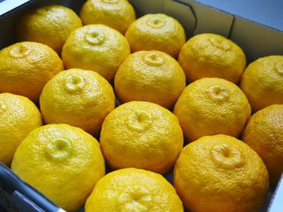 香り高き柚子(ゆず) 今年は柚子の裏年?でも、匠は今年もきちんと育てあげるんです_a0254656_18541716.jpg