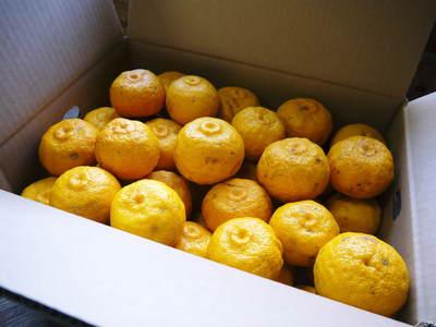 香り高き柚子(ゆず) 今年は柚子の裏年?でも、匠は今年もきちんと育てあげるんです_a0254656_19463441.jpg