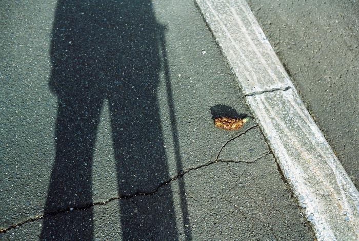 自影と松カサ_c0182775_17203072.jpg