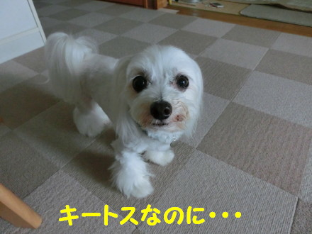 b0193480_1555869.jpg