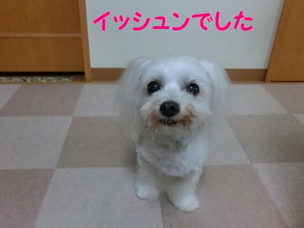 b0193480_16047.jpg
