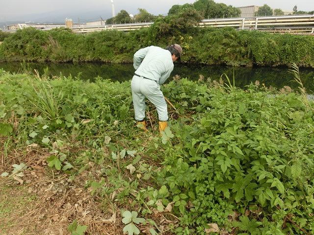 お彼岸を過ぎたヒガンバナは、これから冬にかけて球根に栄養を!_f0141310_7252767.jpg