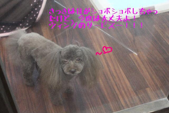 b0130018_1129502.jpg