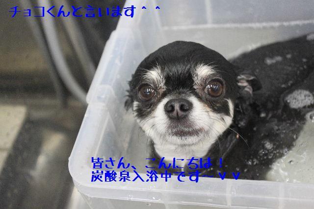b0130018_9425121.jpg