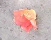 花の命は短くて_a0043520_1810076.jpg