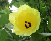 花の命は短くて_a0043520_1873741.jpg