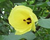 花の命は短くて_a0043520_1875388.jpg
