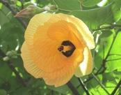 花の命は短くて_a0043520_1883528.jpg