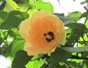 花の命は短くて_a0043520_1884349.jpg