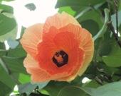 花の命は短くて_a0043520_1891958.jpg