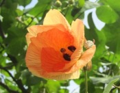 花の命は短くて_a0043520_2075969.jpg