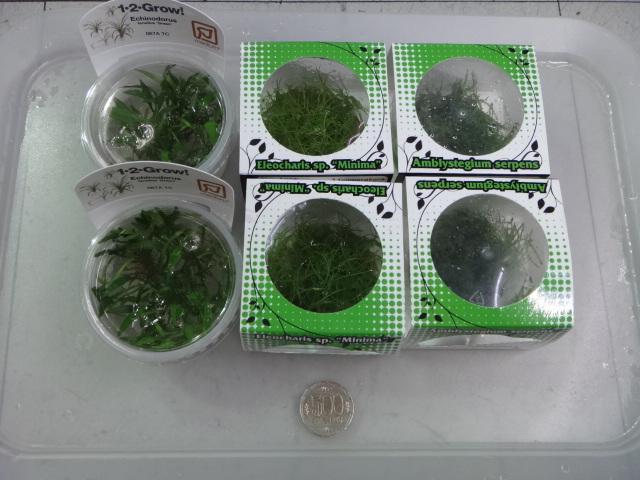 141002 熱帯魚・金魚・水草・観葉植物_f0189122_13111825.jpg