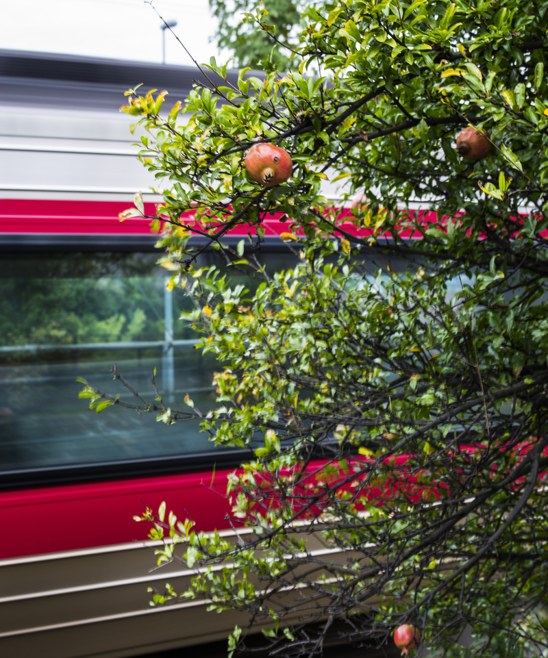 古高松駅 周辺の花を少し_d0246136_21393533.jpg