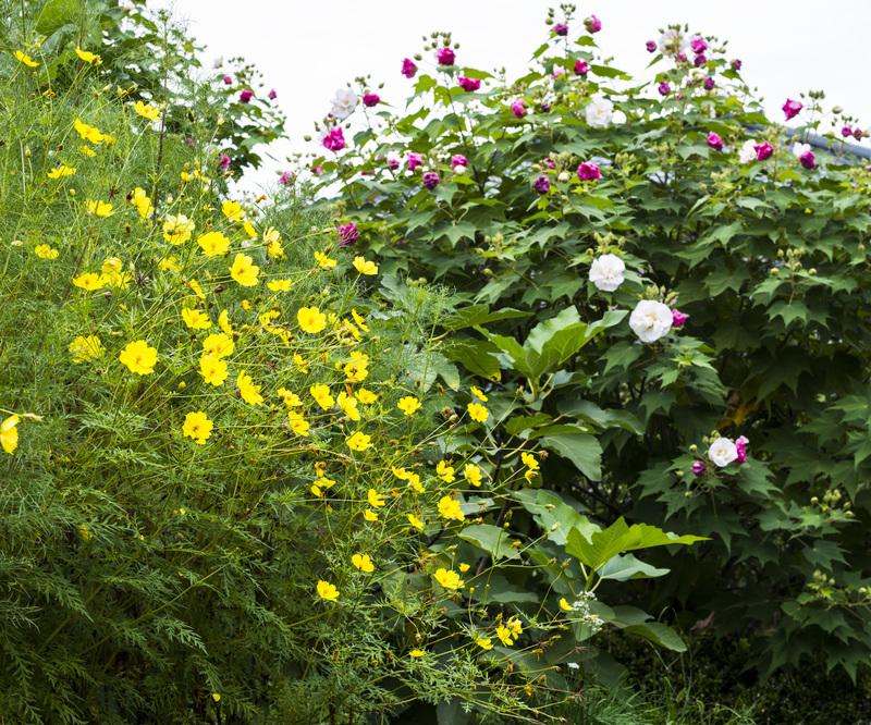 古高松駅 周辺の花を少し_d0246136_21413979.jpg