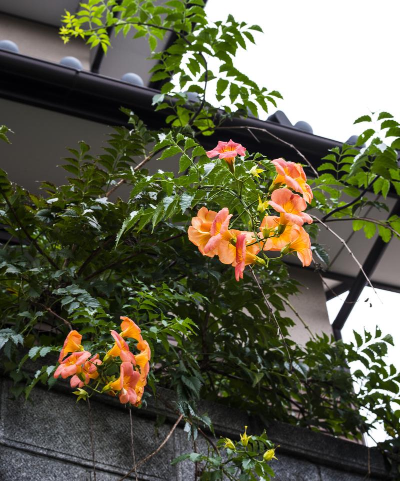 古高松駅 周辺の花を少し_d0246136_2142225.jpg