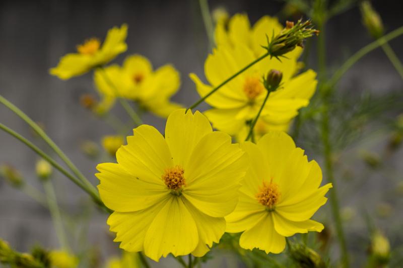 古高松駅 周辺の花を少し_d0246136_21424261.jpg