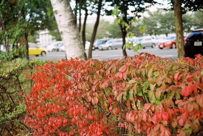 キャンパスの秋色_c0182775_1730157.jpg