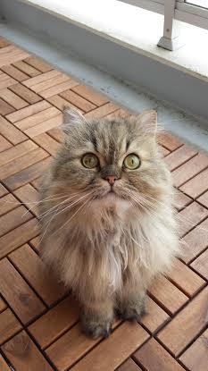 猫ちゃん♪ その3_c0171378_023433.jpg